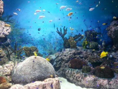 What Is Aquarium Salt